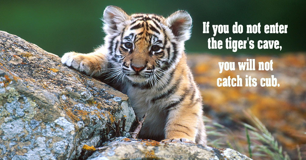 Tiger Quotes Unique If You Do Not Enter The Quotes 48 Remember